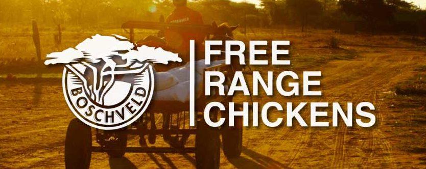 Boschveld Free Range Chickens